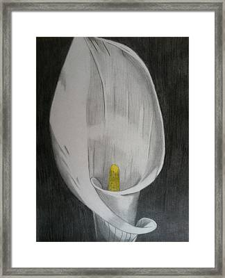 Calla Lilly Framed Print by Paul Barille