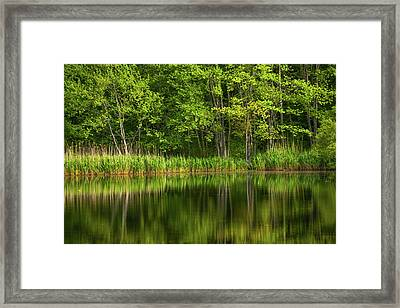 Calming Trees Framed Print by Karol Livote