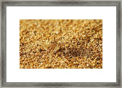 Camouflaged Framed Print by Michael Peychich
