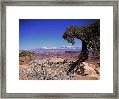 Canyonlands 4 Framed Print by Marty Koch