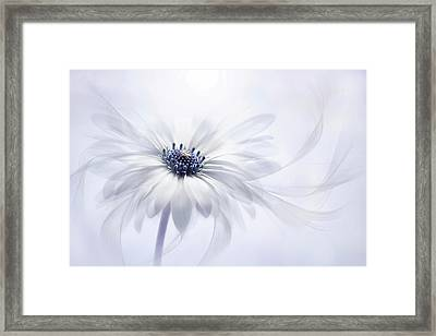 Cape Daisy Framed Print by Jacky Parker