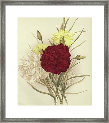 Carnations Framed Print by English School
