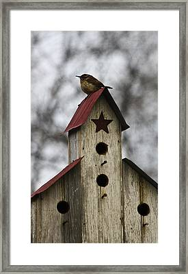 Carolina Wren Framed Print by Teresa Mucha