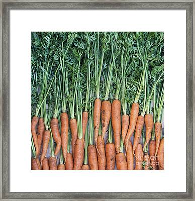 Carrots Framed Print by Tim Gainey