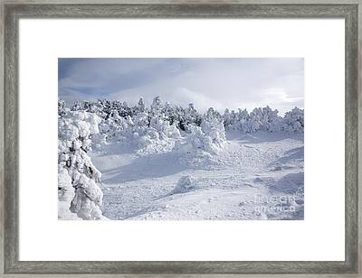 Carter Dome - White Mountains New Hampshire Usa Framed Print by Erin Paul Donovan