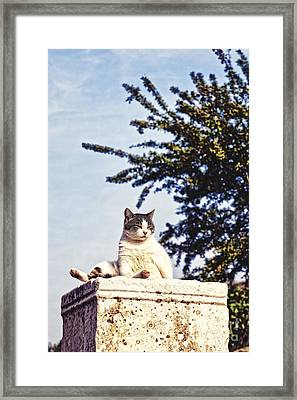 cats of Ephesus Framed Print by HD Connelly