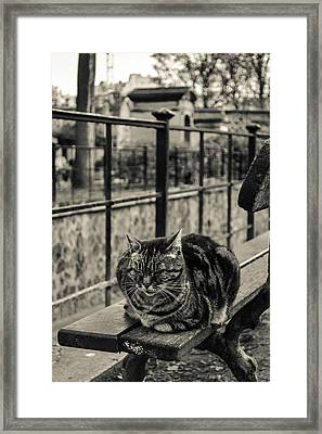 Catspotting Framed Print by Nate Medvedeva