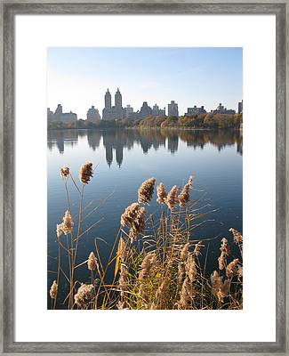 Central Park Framed Print by Yannick Guerin