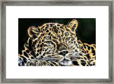 Cheetah Collection Framed Print by Marvin Blaine