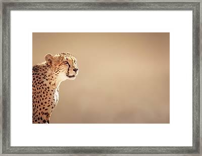 Cheetah Portrait Framed Print by Johan Swanepoel