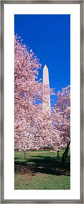Cherry Blossoms And Washington Framed Print by Panoramic Images