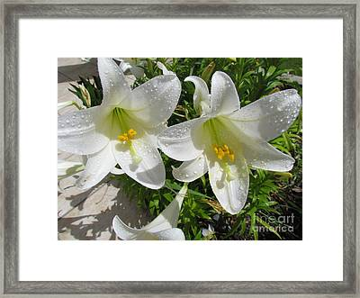 Christmas Lilys Framed Print by Joyce Woodhouse