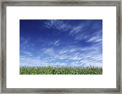 Clouds Over Cornfield Framed Print by Donald  Erickson