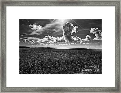 Cocodrie Marsh Framed Print by Scott Pellegrin