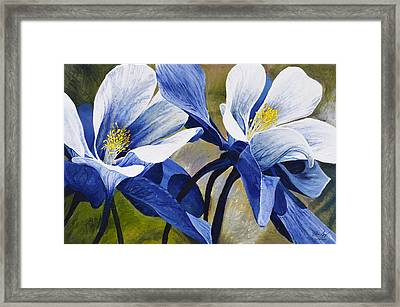 Colorado Columbines Framed Print by Aaron Spong