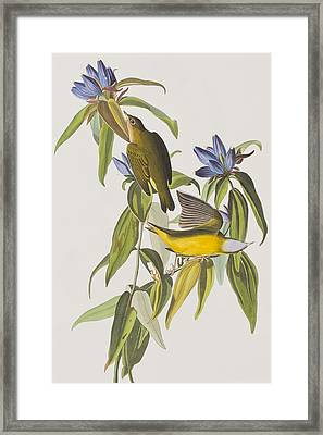 Connecticut Warbler Framed Print by John James Audubon