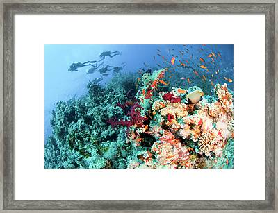 Coral Reef  Framed Print by Hagai Nativ