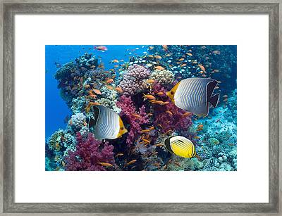 Coral Reef Scenery With Fish Framed Print by Georgette Douwma