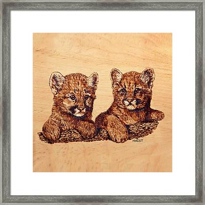 Cougar Cubs Framed Print by Ron Haist