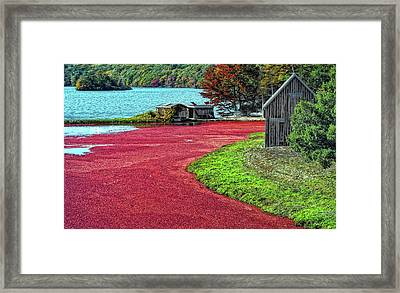 Cranberries Framed Print by Gina Cormier