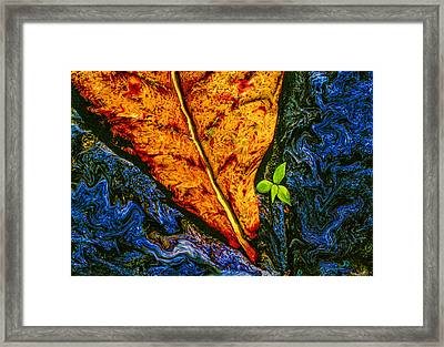 Cycle Of Life Framed Print by Paul Wear