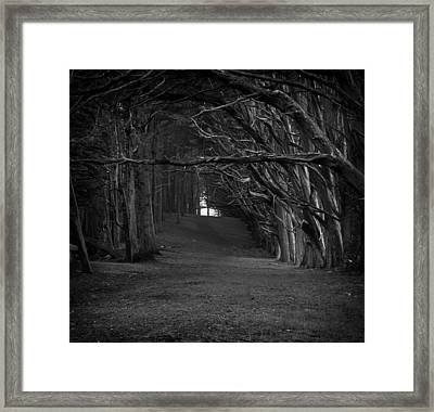 Cypress Canopy - Monterey California Framed Print by Mountain Dreams