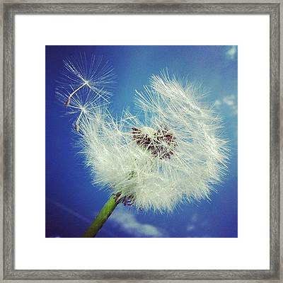 Dandelion And Blue Sky Framed Print by Matthias Hauser