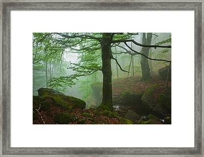 Dark Forest Framed Print by Evgeni Dinev
