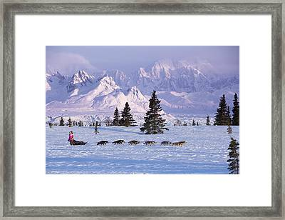 Deedee Jonrowe Mushes Her Dog Team Framed Print by Jeff Schultz
