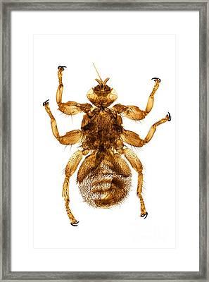 Deer Fly, Light Micrograph Framed Print by Dr. Keith Wheeler