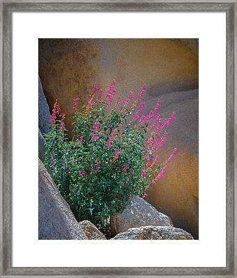 Desert Lupine Framed Print by Joseph Smith
