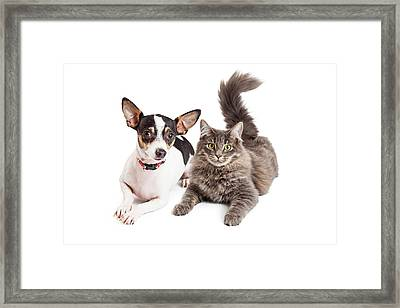 Dog And Cat Laying Together Looking Forward Framed Print by Susan Schmitz