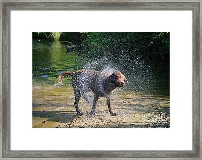 Dog Shaking Off Framed Print by Mark Taylor
