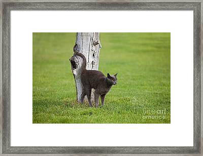 Domestic Cat Framed Print by Gerard Lacz