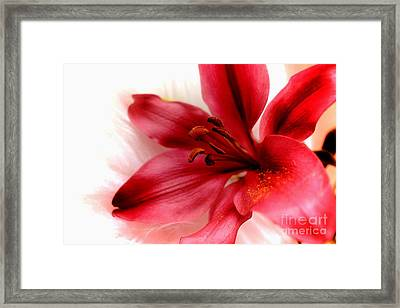 Dreaming Of Beauty Framed Print by Clare Bevan