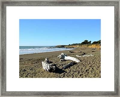 Driftwood On Moonstone Beach Framed Print by Barbara Snyder