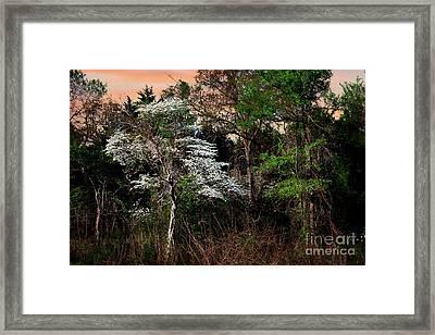 Easter Dogwood Framed Print by Tamyra Ayles