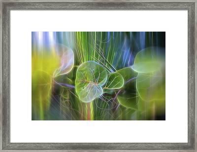 Eden Framed Print by Evie Carrier