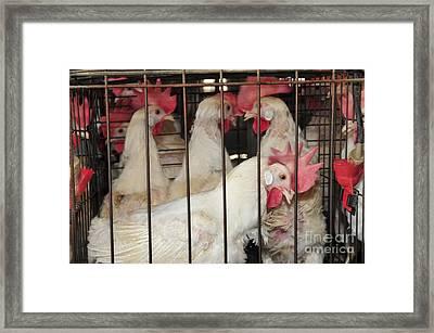 Egg Farming Framed Print by PhotoStock-Israel