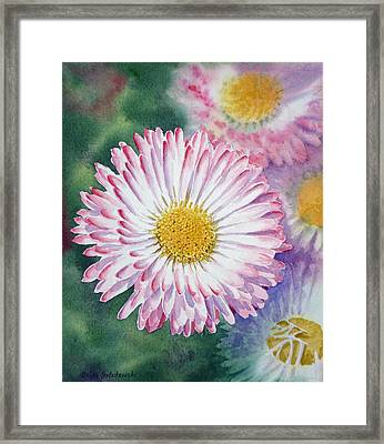 English Daisies Framed Print by Irina Sztukowski