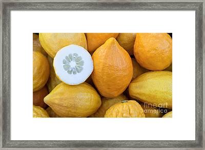 Etrog Citrons Framed Print by Inga Spence