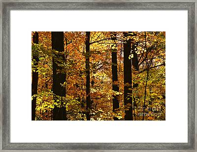 Fall Forest Framed Print by Elena Elisseeva