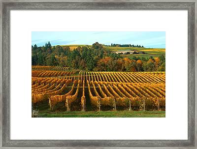 Fall In A Vineyard Framed Print by Margaret Hood