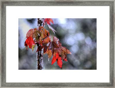 Fall In The Florida Panhandle Framed Print by JC Findley