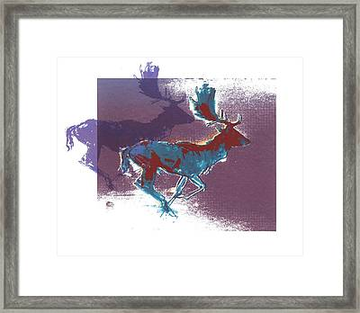 Fallow Bucks Framed Print by Mark Adlington
