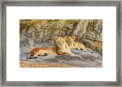 Female Lion And Cub Framed Print by Marv Vandehey