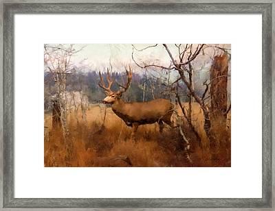 Field Deer Framed Print by Gary Grayson