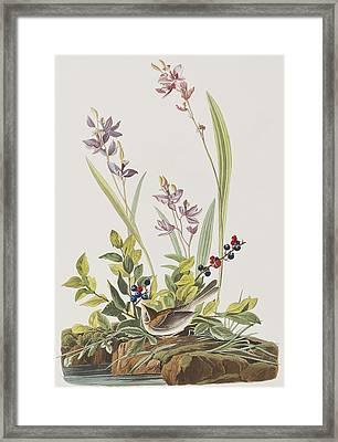 Field Sparrow Framed Print by John James Audubon