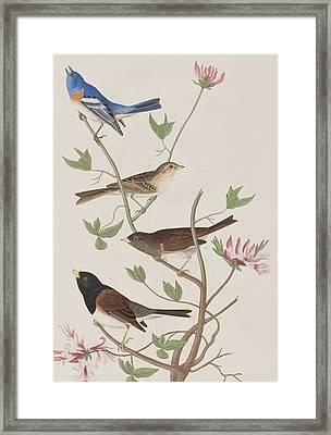 Finches Framed Print by John James Audubon