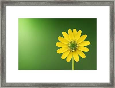 Flower Framed Print by Bess Hamiti